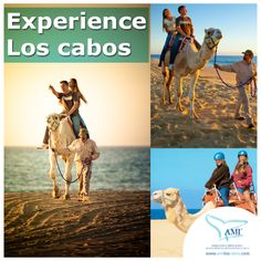 These gentle giants will take you on a fun and unique ride across the white sands of the beach in #LosCabos #Camel #CamelRide #Cabo #Mexico