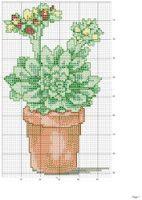 Borduurpatroon Bloem- Plant- Dier *Cross Stitch Flower- Plant- Animal  ~Vetplant *Succulent~