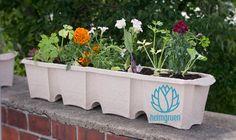 heimgruen - Dein Balkonkasten aus Altpapier | Blumenkasten Raupe fertig bepflanzt | Nachhaltig | biologisch abbaubar Blumentopf | Grüner Daumen auf dem Balkon | Papierpflanztöpfe | recycelbare Pflanzgefäße | - heimgruen® ist die Komplettlösung für frische und bunte Vielfalt auf dem Balkon. Das kompostierbare Pflanzsystem garantiert einen grünen Daumen und ein reines Gewissen gegenüber der Natur. Das Herzstück von heimgruen® bildet der Balkonkasten Raupe, welcher fast ausschließlich aus ...