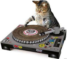 Musician Kitty, I like your dj scratch