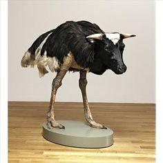 Misfit (Cow)