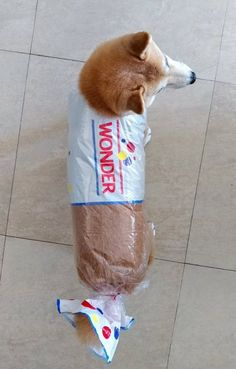 There are pet costumes. And then there are amazingly epic pet costumes. Here is a collection of the greatest pet Halloween costumes to ever grace the web. Funny Animal Jokes, Funny Dog Memes, Cute Funny Animals, Funny Animal Pictures, Funny Cute, Cute Dogs, Funniest Memes, Hilarious Pictures, Doge Meme