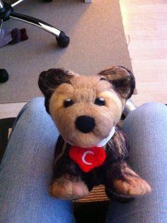 - Yorkie Puppy, Felt, Teddy Bear, Puppies, Toys, Animals, Activity Toys, Felting, Cubs