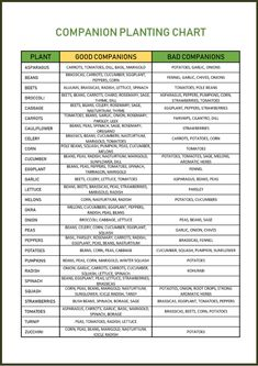 Companion planting is a great way to improve your garden! It can help reduce pests, improve flavor, and make gardening easier. Here's the complete guide to companion planting, plus a free companion planting chart to help you in your vegetable garden this year! Squash Companion Plants, Pepper Plants, Tomato Garden, Vegetable Garden, Growing Onions, Garden Planner