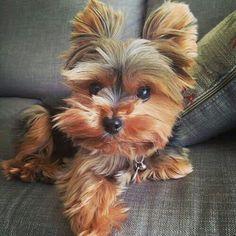 Pet cute ❤