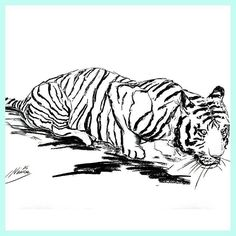 Sometimes life is easy everythings flows... and then there are those challenging times when you have to be strong to move on and fight your very personal demons. But then when you face them long enough they move on and slowly disappear. So don't give up and believe in yourself!  For Sale : Tiger Sketch Nr: S2016-031  Size: 42 x 59.7 cm   16.5 x 23.5 inch  Material: carcoal drawing on paper  Shipping: worldwide  Price:  90- If you are interested in purchasing this sketch  please send an…