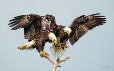 Birds::Ron Wooldridge Photography | Florida Back Country, Nature, Wildlife, Water Photographer
