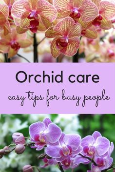 garden care tips Easy tips for orchid care, orchid care for beginners, how to make your orchid rebloom, and orchid planting ideas. Phalaenopsis Orchid Care, Orchid Plant Care, Orchid Plants, Potted Plants, Orchid Flowers, Flowering Plants, Cactus Flower, Exotic Flowers, Gardens