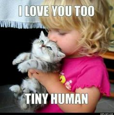 Cute kitten w/ little girl