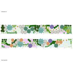 Pflanzplan Mit Japanischem Fächerahorn Hortensien Hostas Farnen