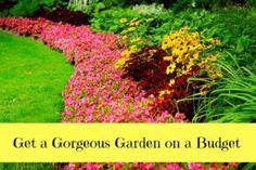 Growing a Garden on a Budget - Moola Saving Mom