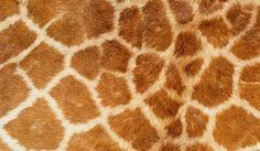 real-animal-skin-textures-giraffe