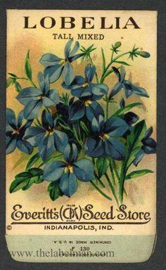 EVERITT'S SEED STORE,  Lobelia F130, Vintage Seed Packet Posters Vintage, Vintage Labels, Vintage Ephemera, Vintage Cards, Vintage Postcards, Vintage Prints, Seed Art, Vintage Seed Packets, Seed Packaging