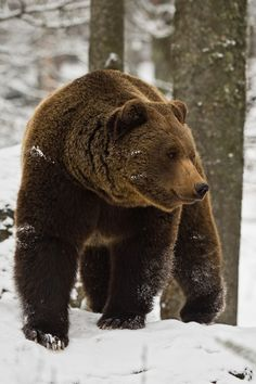 I love my children and would fight anything to protect them. I'd win too. Mamma Grizzly Bear Love