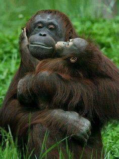 The mother-child bond!