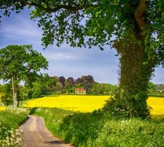 A country lane near Egdean, West Sussex.