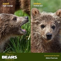Which bear will you relate to most when you #MeetTheCubs?
