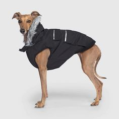 Dog Vest, Dog Jacket, Bulldog Puppies For Sale, Mixed Breed, Green Jacket, Neon Green, Dog Breeds, Fur, Explore