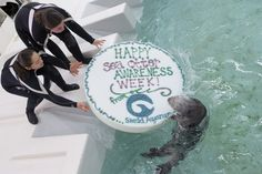 Otters celebrate Sea Otter Awareness Week with fishy cakes! - September 29, 2012 - 3 photos today!