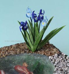 Dollhouse flag iris planted beside a miniature fish pond made from florist's foam.