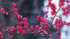Скачать обои цветочки, ветка, розовое, раздел природа в разрешении 1920x1080