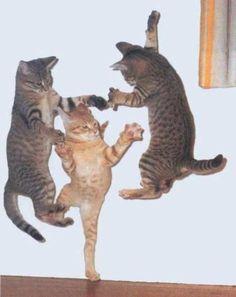Timing perfeito - Fotos felinas tiradas no momento exato 5 32