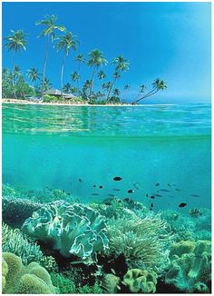 Wakatobi - Southeast Sulawesi, Indonesia. #travel #explore #indonesia