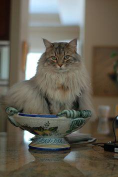Kitty Parfait