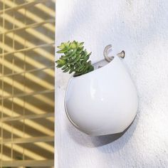 ceramic hanging planter by dingading terrariums | notonthehighstreet.com