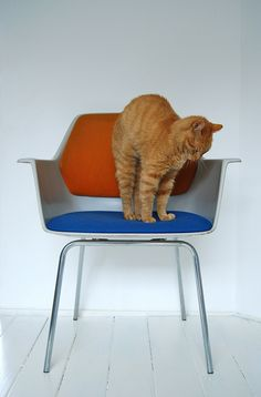 cat stretching on a chair
