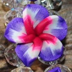 So unusual! Love the colors in this flower. Hawiian Flowers, Hawiian Wedding, Hawaiian Tattoo, Crystal Bracelets, Pretty Cool, Beautiful Flowers, Centerpieces, Arts And Crafts, Tropical