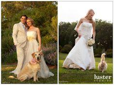 animais casamento
