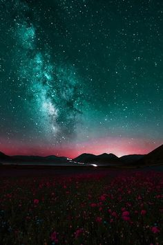 ImageFind images and videos about nature, flowers and sky on We Heart It - the app to get lost in what you love. Beautiful Sky, Beautiful World, Cosmos, Kia Ora, Sky Full Of Stars, To Infinity And Beyond, Milky Way, Science And Nature, Night Skies