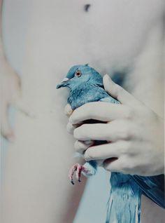 KAZAN_by_Mayumi Hosokura 青鳥