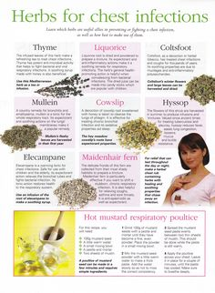 Herbs for chest infections