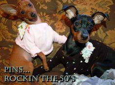 MIN PINS...ROCKIN THE 50'S MY PINNY AND BUG!