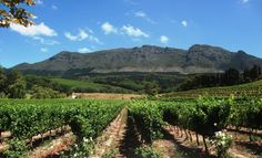 The beautiful Constantia wine valley, Cape Town, South Africa