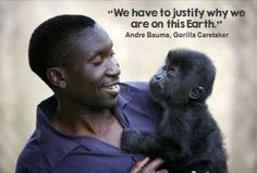 Incredible documentary on Netflix. Exec produced by Leo di caprio. It is saddening, heart swelling and thrilling. I challenge you not to be moved. The Incredible True Story, Amazing, Baby Gorillas, Engage On, Trophy Hunting, Animal Species, Perfect World, Black Men, Black Guys