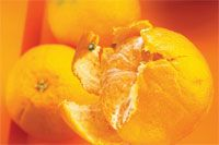 Why the Limonene in Orange Oil Can Provide a POWERFUL Boost to Your Immune System (and Why Orange Oil is Especially Recommended for Creative Folks) - All Body Ecology Articles