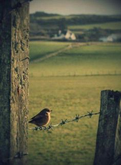 Morning-time in Ireland. Gorgeous countryside with a little bird greeting the sun.Morning-time in Ireland. Gorgeous countryside with a little bird greeting the sun. Country Farm, Country Life, Country Living, Country Roads, Esprit Country, Time In Ireland, One Day Tour, Country Scenes, Backyard Fences