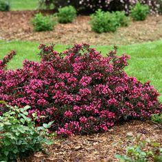 Garden Shrubs, Flowering Shrubs, Trees And Shrubs, Trees To Plant, Garden Plants, Garden Gnomes, House Plants, Flower Landscape, Landscape Design