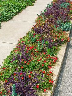 colorful mix of plants for ground cover including red potentilla shares, drought-tolerant 'Purple Heart' wandering Jew and blue-green succulents