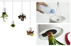 Boskke's Sky Planter scores red dot :: Idealog :: the magazine and website of New Zealand creative business, ideas and innovation