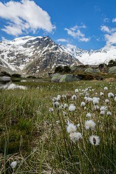 Steilwand Andermatt, Flora, Berg, Mount Rainier, Kanton, Mountains, Nature, Travel, Viajes