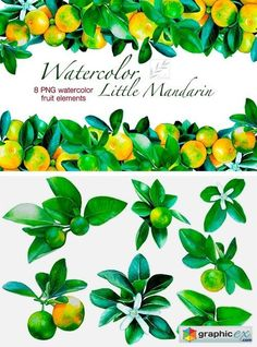 Watercolour Little Mandarins  stock images