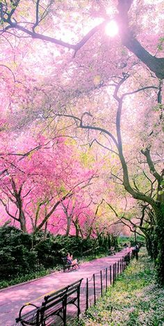 We have been waiting for you, Spring, with open arms. Welcome. Please stay as long as you'd like. I can't wait until you've decorated #CentralPark to look like this picture. Ah…..the beauty.