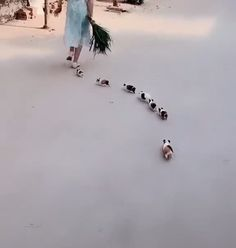 This is adorable 😘😘 - Jade Lauren - This is adorable 😘😘 Guinea pigs funny 😁 - Cute Funny Animals, Cute Baby Animals, Animals And Pets, Cute Cats, Cutest Animals, Cute Animal Videos, Cute Animal Pictures, Baby Guinea Pigs, Guinea Pig Funny