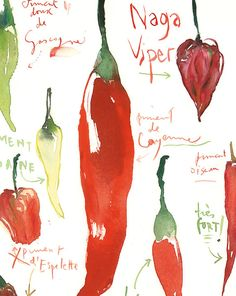 Red hot chili pepper decor Watercolor art di lucileskitchen