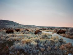expressions-of-nature: Antelope Island State Park, Utah...