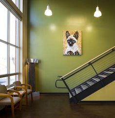 Upstate Veterinary Specialists Asheville - by Animal Arts Design Studios
